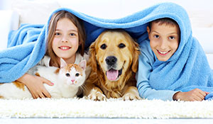 Come in and see our selection of kidproof and pet friendly flooring today!